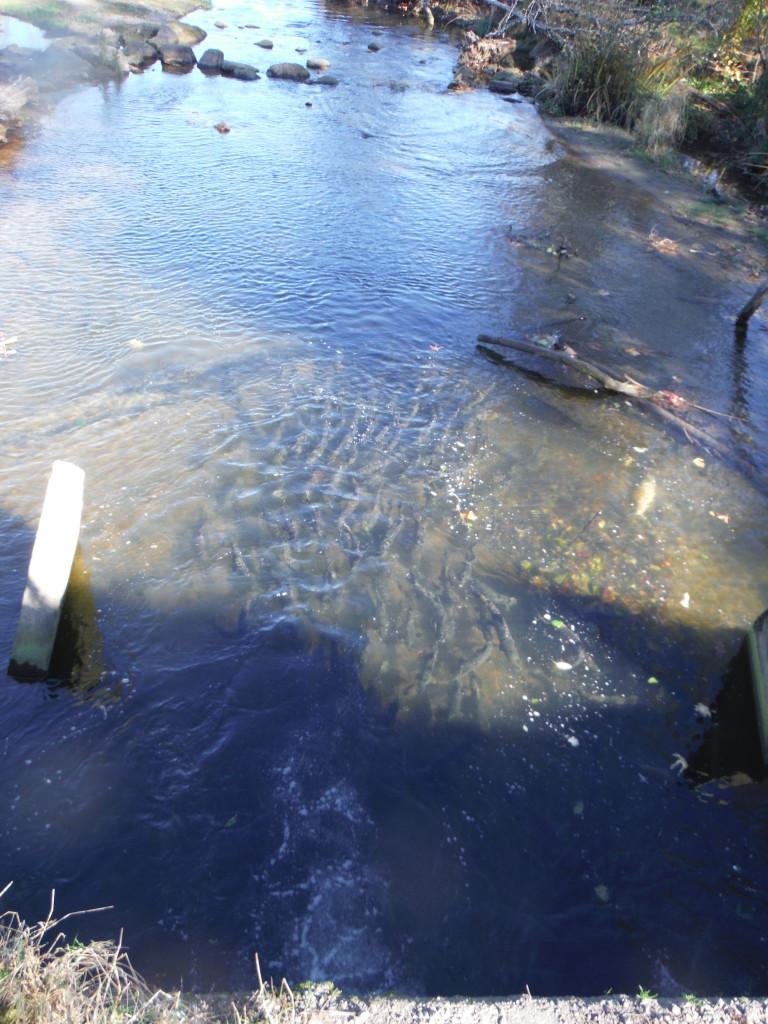 Chico Creek Chum